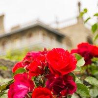 Дворец в цветах. :: Ruslan