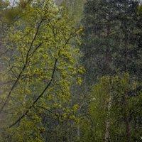 Майский дождь :: Михаил Тищенко