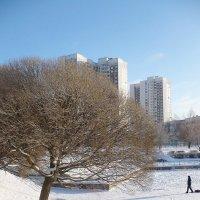 Зима в городе... :: Жанна Литуева