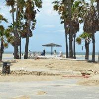 Пальмы солнце и песок :: Николай Танаев