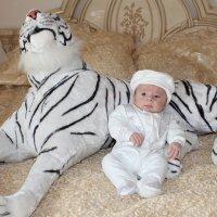 Мой собственный белый тигр :: Михаил Костоломов