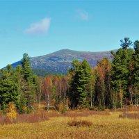 Берёзово-кедровый лес :: Сергей Чиняев
