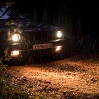 Грибной дождик в лесу :: A_Performance ...