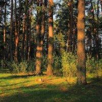 Лучистою рассветной тишиной... :: Лесо-Вед (Баранов)