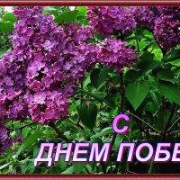 с Победой! :: Александр Корчемный