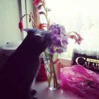 Романтик котяра :: Анюта Золотых