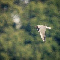Птица :: Ruslan --