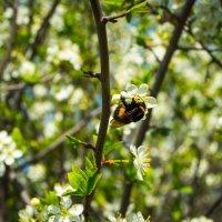 Сладкий нектар :: Мария Букина