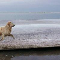 Собачье счастье :: Анатолий Шулков