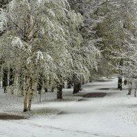 Май - месяц зимний. :: Анатолий. Chesnavik.