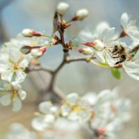 весна :: Tatyana Belova