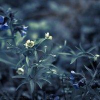 Первые весенние цветы :: Ник Мелон