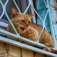 кот пушок. :: Ольга Бархатова
