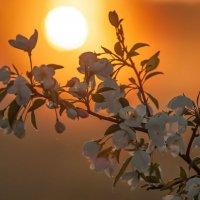 Весеннее пробуждение... :: Сергей Герасимов