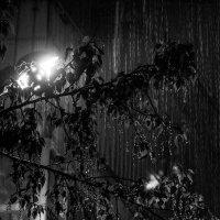 Просто идет дождь :: Сергей Елесин