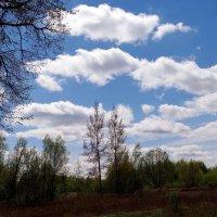 Небо.. :: Антонина Гугаева