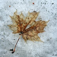 Зимний гербарий :: Мария Кондрашова