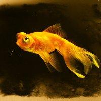 Златая рыбка,,,глазки строитЪ мне,,, :: Юный Пионер Одиннадцатый
