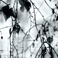 Акварельная  холодная  весна... :: Валерия  Полещикова