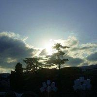 Закат в Ялте :: татьяна