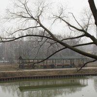 весна.туман :: Lena Zalesska