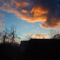 Vakaras / Evening in my garden :: silvestras gaiziunas gaiziunas