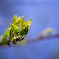 Весна :: Sergey Lebedev