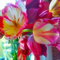 тюльпаны :: SoNata_78