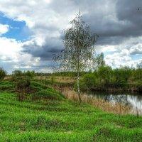 Одинокая берёзка на берегу озера :: Милешкин Владимир Алексеевич