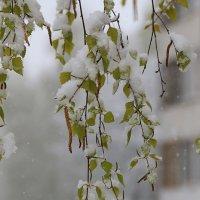 Белая березка под моим окном... :: Татьяна Панчешная