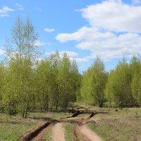 Дорога в лес :: Ольга