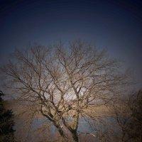Ветвистое дерево :: Павел Зюзин