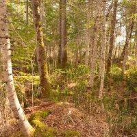 Из леса в лес дорога манит. :: Владимир Куликов
