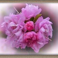 Время цветения :: юрий Амосов