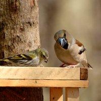 смелый, да? :: linnud