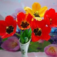 Про тюльпаны.. :: Андрей Заломленков