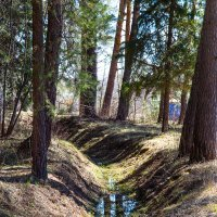 Полдень в лесу :: Алексей Пономарчук