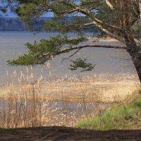 Весенний пейзаж :: Александр Исаков