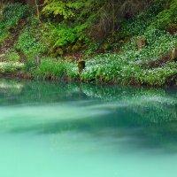 лесное озерцо :: Elena Wymann