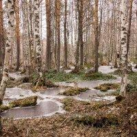 Северный май :: Светлана Ку