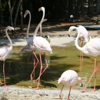 фламинго :: vasya-starik Старик