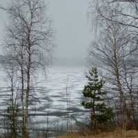 Белая мгла над озером. :: Лилия Гудкова
