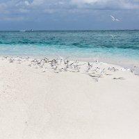 На необитаемом острове.Мальдивы. :: Татьяна Калинкина