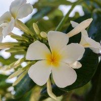Цветущий остров. Мальдивы. :: Татьяна Калинкина