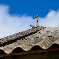 Жители под крышей :: Наталья Узунова