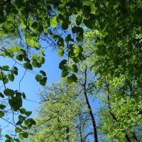 Мой лес :: Юрий Владимирович 34