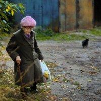 если чёрный кот дорогу перейдёт.. :: Gala *