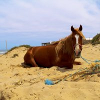 на пляже... :: Annie Amar