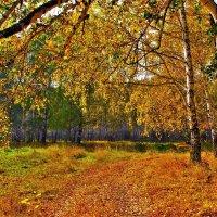 Осень в березнике :: Сергей Чиняев