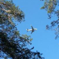 Подними глаза, посмотри в открытое окно лесных деревьев.. )) :: Светлана Сейбянова